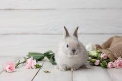 Lapin de Pâques avec des fleurs sur les planches blanches Image libre de droits