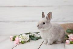 Lapin de Pâques avec des fleurs sur les planches blanches Photo stock