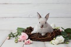 Lapin de Pâques avec des fleurs sur les planches blanches Photos libres de droits