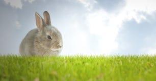 Lapin de Pâques avec des oeufs devant le ciel bleu illustration libre de droits