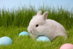 Lapin de Pâques avec l'oeuf sur le fond d'herbe Image libre de droits