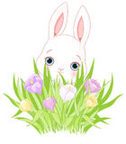 Lapin de Pâques avec le bouquet de crocus illustration stock