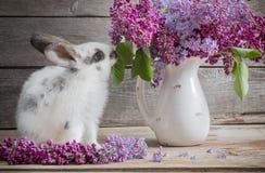 Lapin de Pâques avec le lilas Photographie stock
