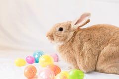 Lapin de Pâques avec le panier des oeufs de pâques colorés Photo stock