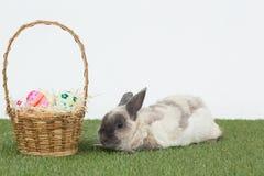 Lapin de Pâques avec le panier des oeufs sur l'herbe Photo stock