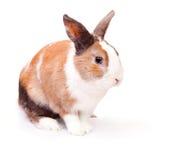 Lapin de Pâques avec une fourrure pelucheuse blanche Photo libre de droits