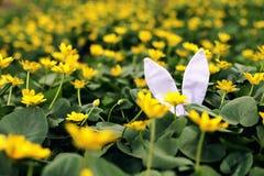 Lapin de Pâques caché sur un pré de fleur, fleurs jaunes de ressort sur un pré d'herbe verte Ressort de concept, lièvre d'oreille photographie stock libre de droits