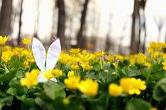 Lapin de Pâques caché sur un pré de fleur, fleurs jaunes de ressort sur un pré d'herbe verte Ressort de concept, lièvre d'oreille photographie stock