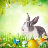 Lapin de Pâques dans l'herbe photographie stock libre de droits