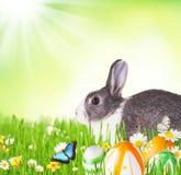 Lapin de Pâques dans l'herbe photo stock