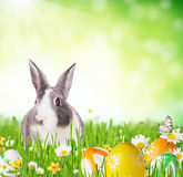Lapin de Pâques dans l'herbe photo libre de droits