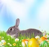 Lapin de Pâques dans l'herbe images libres de droits