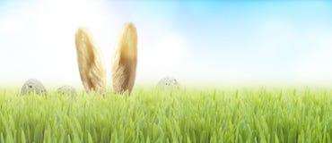 Lapin de Pâques dans l'herbe photos stock