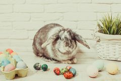 Lapin de Pâques dans la maison photos stock