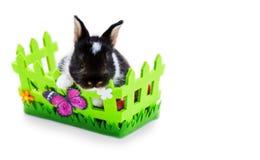 Lapin de Pâques dans le panier Photographie stock libre de droits