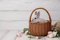 Lapin de Pâques dans le panier sur les planches blanches Photographie stock libre de droits