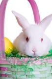 Lapin de Pâques dans un panier photos libres de droits