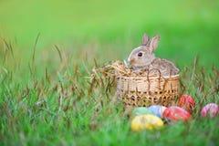 Lapin de Pâques et oeufs de pâques sur le panier se reposant lapin brun extérieur/petit d'herbe verte photographie stock libre de droits