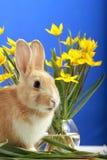 Lapin de Pâques et tulipes jaunes Photos libres de droits