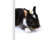 Lapin de Pâques, fond, blanc Photographie stock libre de droits