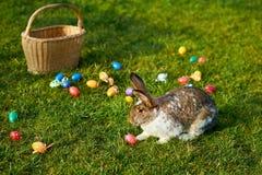 Lapin de Pâques heureux photos libres de droits