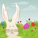 Lapin de Pâques mignon sur un pré Images stock