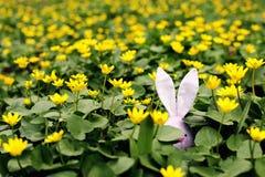 Lapin de P?ques cach? sur un pr? de fleur, fleurs jaunes de ressort sur un pr? d'herbe verte Ressort de concept, li?vre d'oreille photos libres de droits