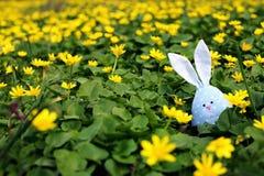 Lapin de P?ques cach? sur un pr? de fleur, fleurs jaunes de ressort sur un pr? d'herbe verte Ressort de concept, li?vre d'oreille photo stock