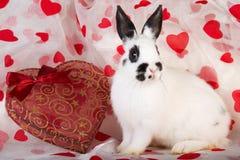 Lapin de Valentine avec des coeurs Photographie stock