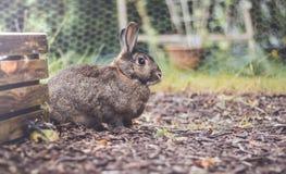 Lapin domestique gris et brun adorable dans le jardin, arrangement de vintage photographie stock libre de droits