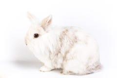 Lapin doux blanc Photos libres de droits