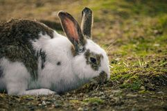 Lapin en parc photo stock