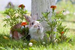 Lapin entre les fleurs photographie stock libre de droits