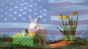 Lapin et oeufs de Pâques dans un jardin clips vidéos