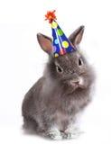 Lapin gris velu fâché avec un chapeau d'anniversaire en fonction Photographie stock