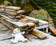 Lapin humide sur le dock Images stock