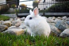 Lapin jouant dans l'herbe photo stock