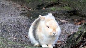 Lapin, lapin nain, extérieur, Pâques banque de vidéos