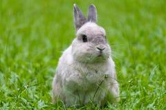 Lapin mignon détendant sur l'herbe Image libre de droits