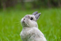 Lapin mignon détendant sur l'herbe Photographie stock libre de droits