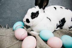 Lapin mignon d'oeufs de pâques sur le fond rustique le lapin à la maison photographie stock