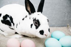 Lapin mignon d'oeufs de pâques sur le fond rustique le lapin à la maison images stock