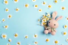 Lapin mignon de jouet avec des fleurs de camomille et espace de copie sur un b bleu Photos libres de droits