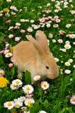 Lapin mignon en fleurs image libre de droits