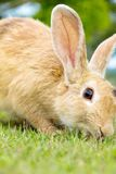 Lapin mignon sur l'herbe photos stock