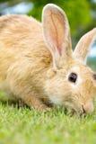 Lapin mignon sur l'herbe Photos stock