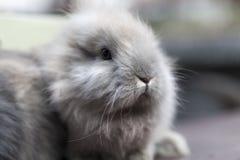 Petit lapin Photo libre de droits