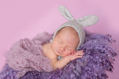 Lapin nouveau-né de bébé Photos libres de droits