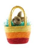 lapin Pâques de panier Images stock