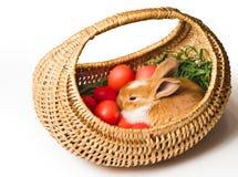 lapin Pâques de panier Photographie stock